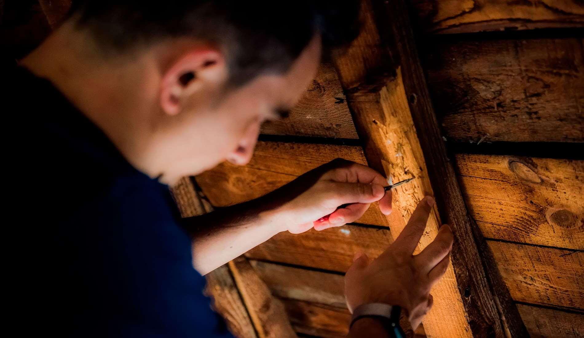 Comment traiter efficacement la mérule dans ma maison ?